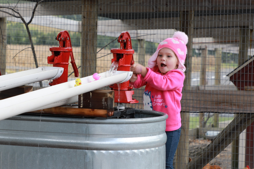 Douglas' Duck Race - Pioneer Evergreen Farms